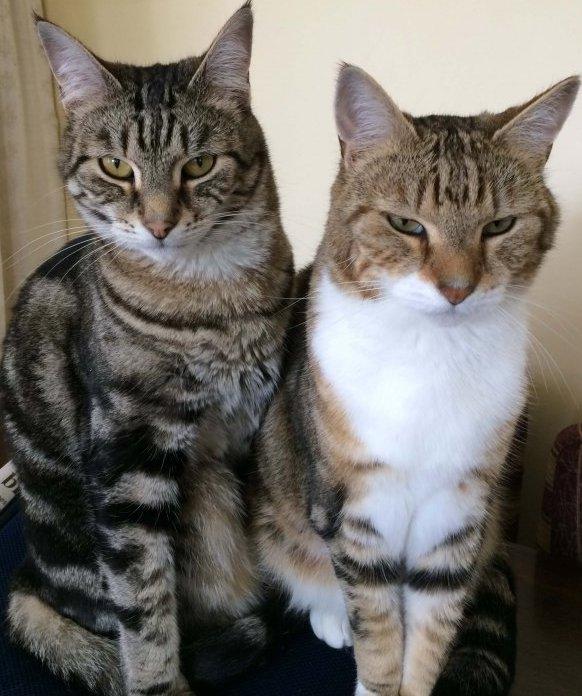 キティとジンジー