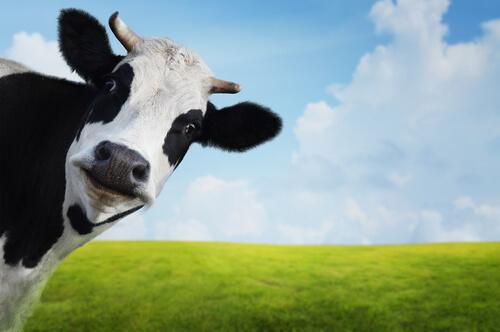 ニュージーランドの酪農農家