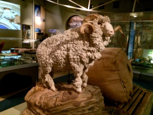オタゴ博物館 メリノの羊