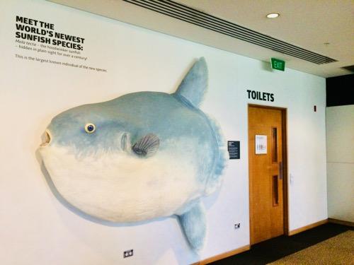 オタゴ博物館 トイレ