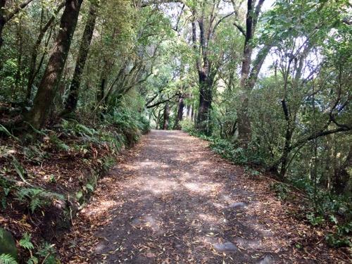 ダニーデン植物園 シャクナゲの谷への道