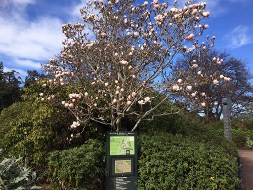 ニーデン植物園 マグノリア