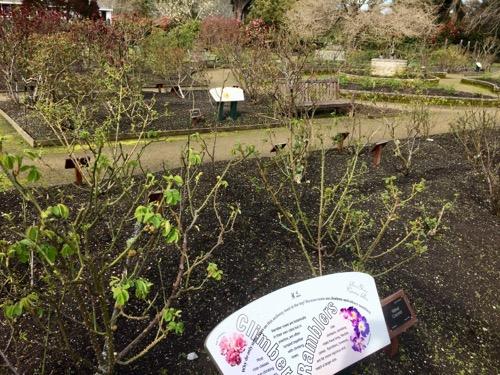 ダニーデン植物園 バラエリア