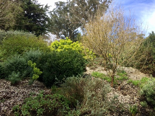 ダニーデン植物園 地中海のエリア2