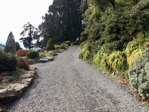 ダニーデン植物園 シャクナゲの谷へ歩いて