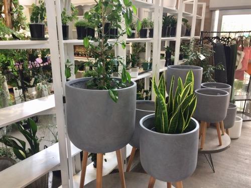 Nichols ダニーデン 室内用観葉植物