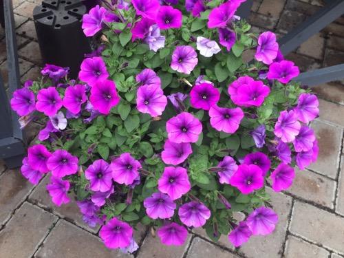 Nichols ダニーデン季節のお花