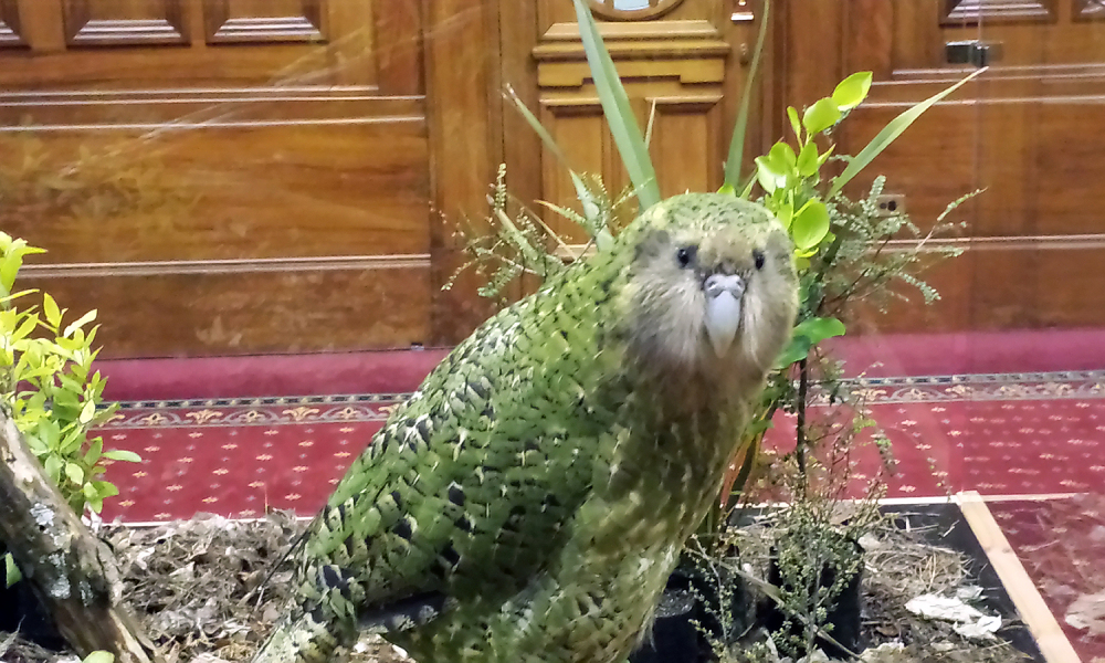 シロッコの国会訪問