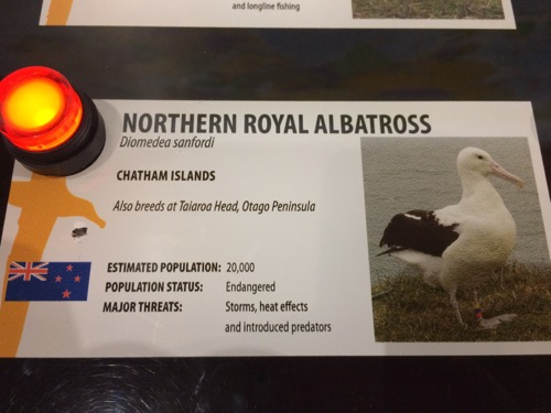ダニーデンアルバトロスセンター ロイヤルアルバトロスの説明
