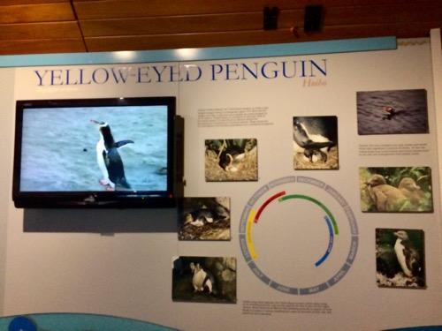 ダニーデンアルバトロスセンター イエローアイペンギンの説明