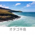 オタゴ半島の観光