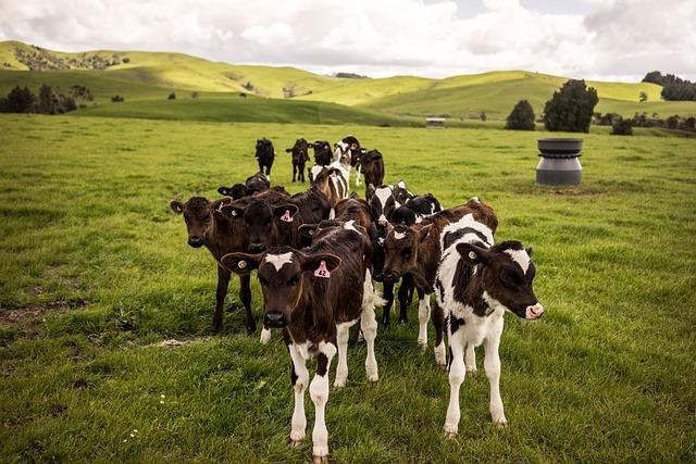 ニュージーランドのバターはグラスフェッドバター