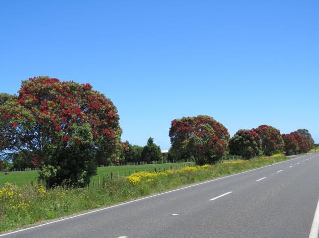 ニュージーランドのクリスマスツリーポフツカワが見られる場所は?