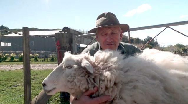 ニュージーランドのモコモコ羊ちゃんギジー・シュレック