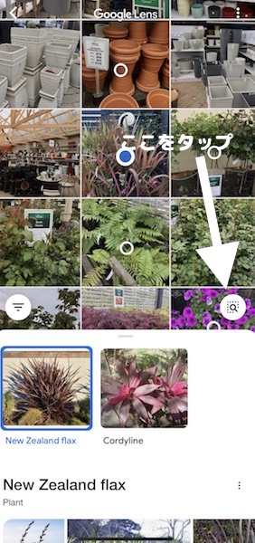 iPhoneで植物の画像検索をするやり方