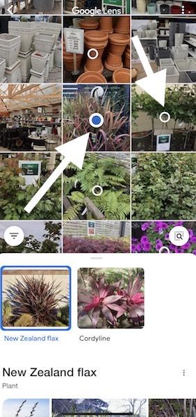 iPhoneで植物の画像を選び検索する方法