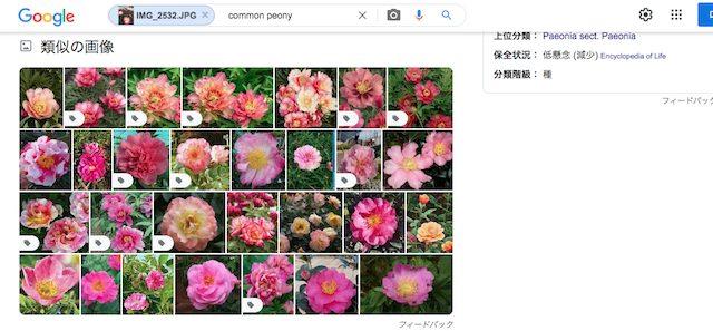 花の画像を検索エンジンで識別する方法PC版