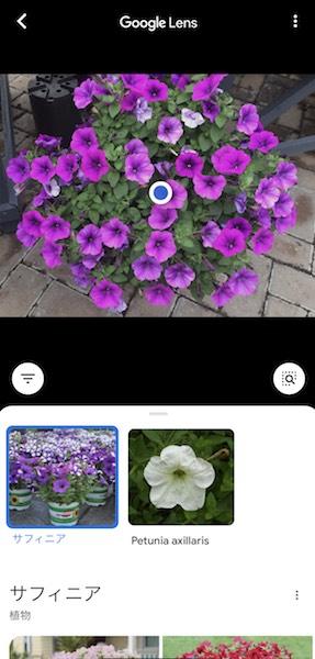 検索エンジンで植物の画像を分析する方法iPhone編