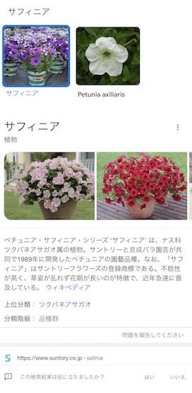 花の画像をiPhoneで検索する方法